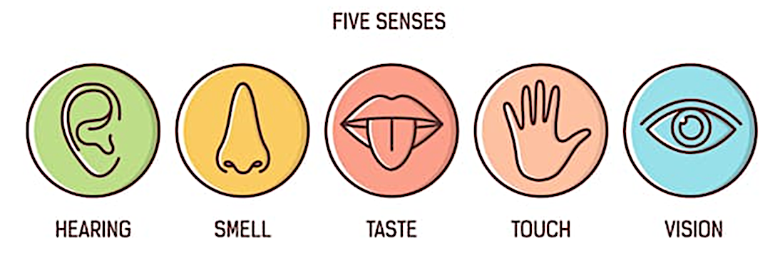 The five senses, hearing, smell, taste, touch, vision, Oodo™